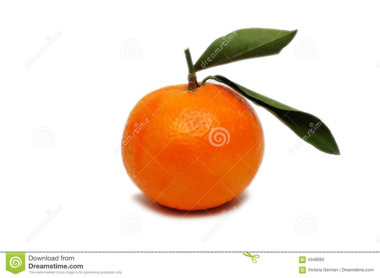 Tangerine isolated on a white background.