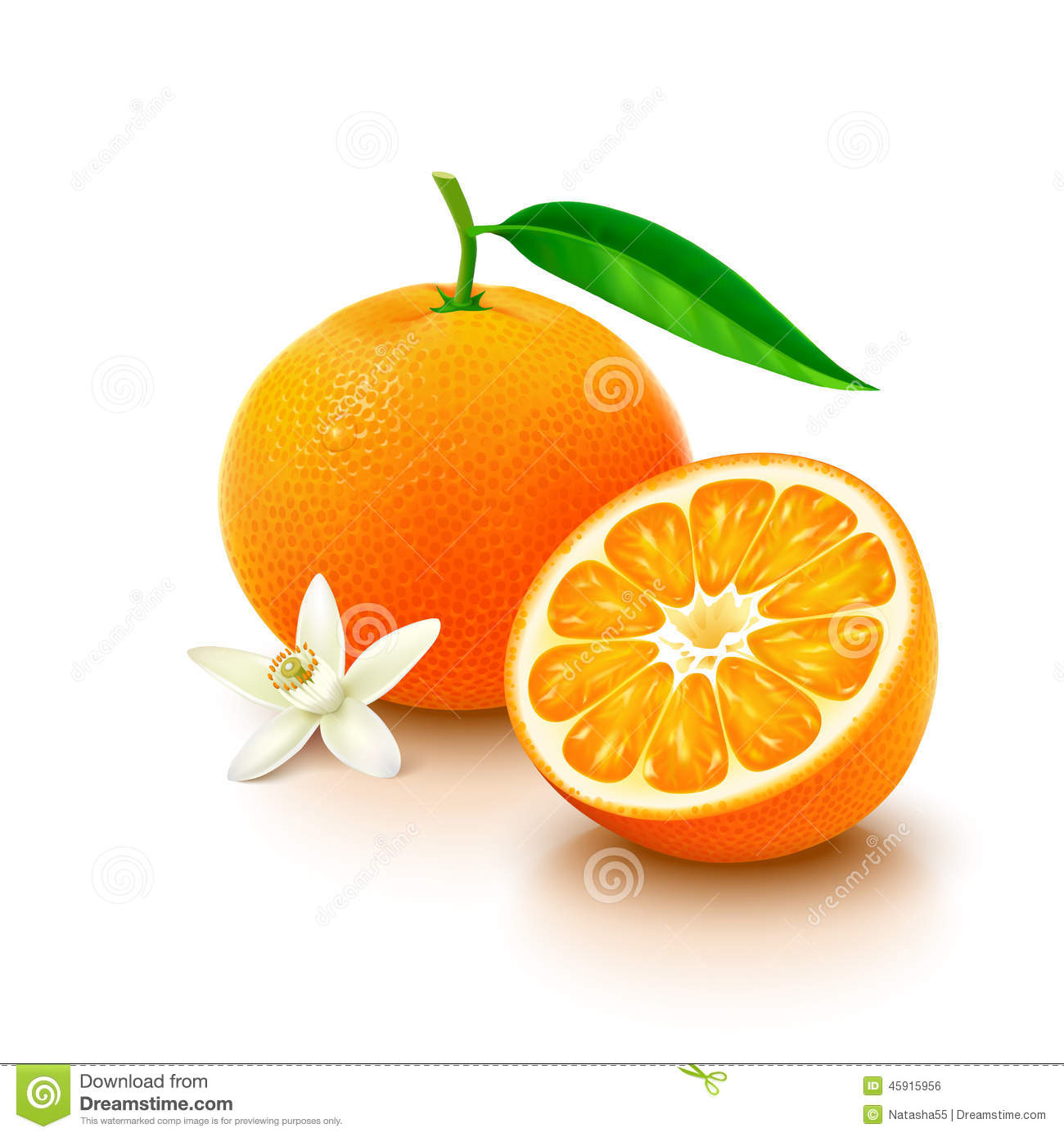 Orange Fruit Vector Tangerine Fruit...