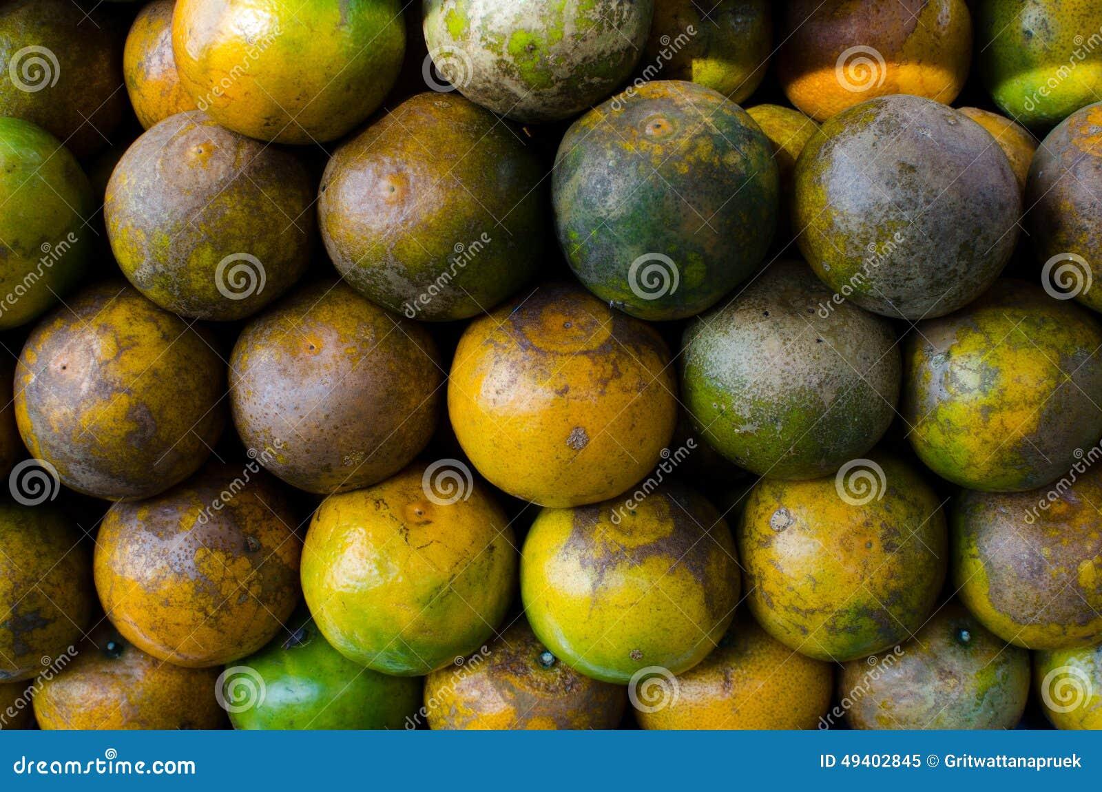 Download Tangerinen stockbild. Bild von mehrfach, eßbar, industrie - 49402845