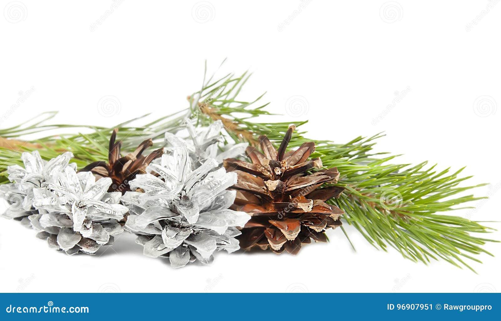 Tannenbaumast und -kegel lokalisiert auf Weiß