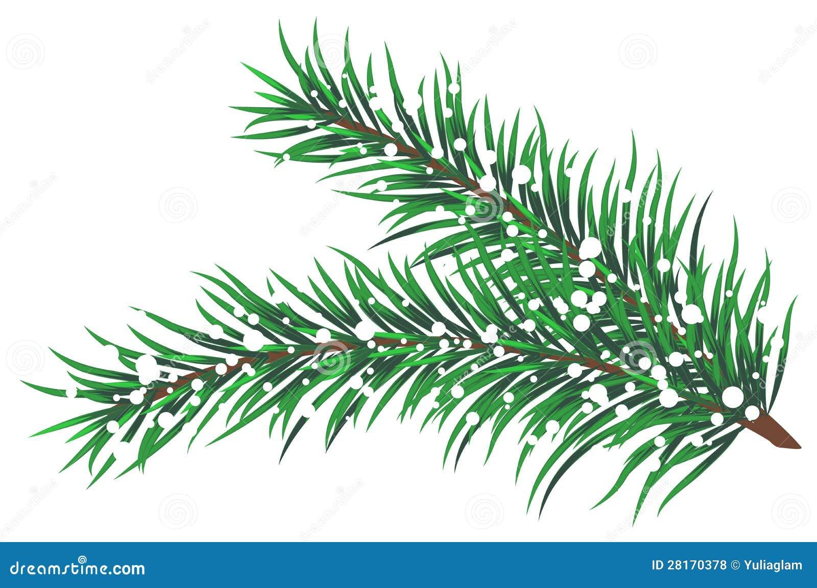 tannenzweige mit schnee vektor abbildung illustration von tanne 28170378. Black Bedroom Furniture Sets. Home Design Ideas