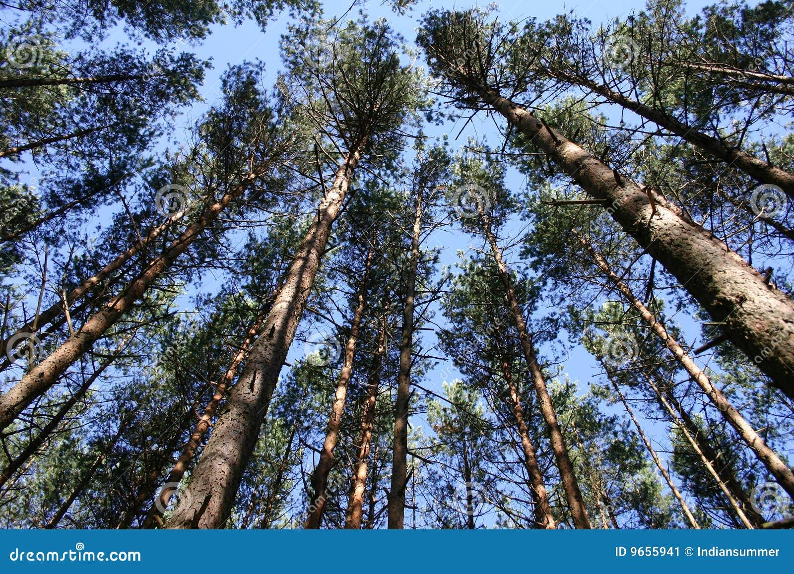 Tapa de árboles