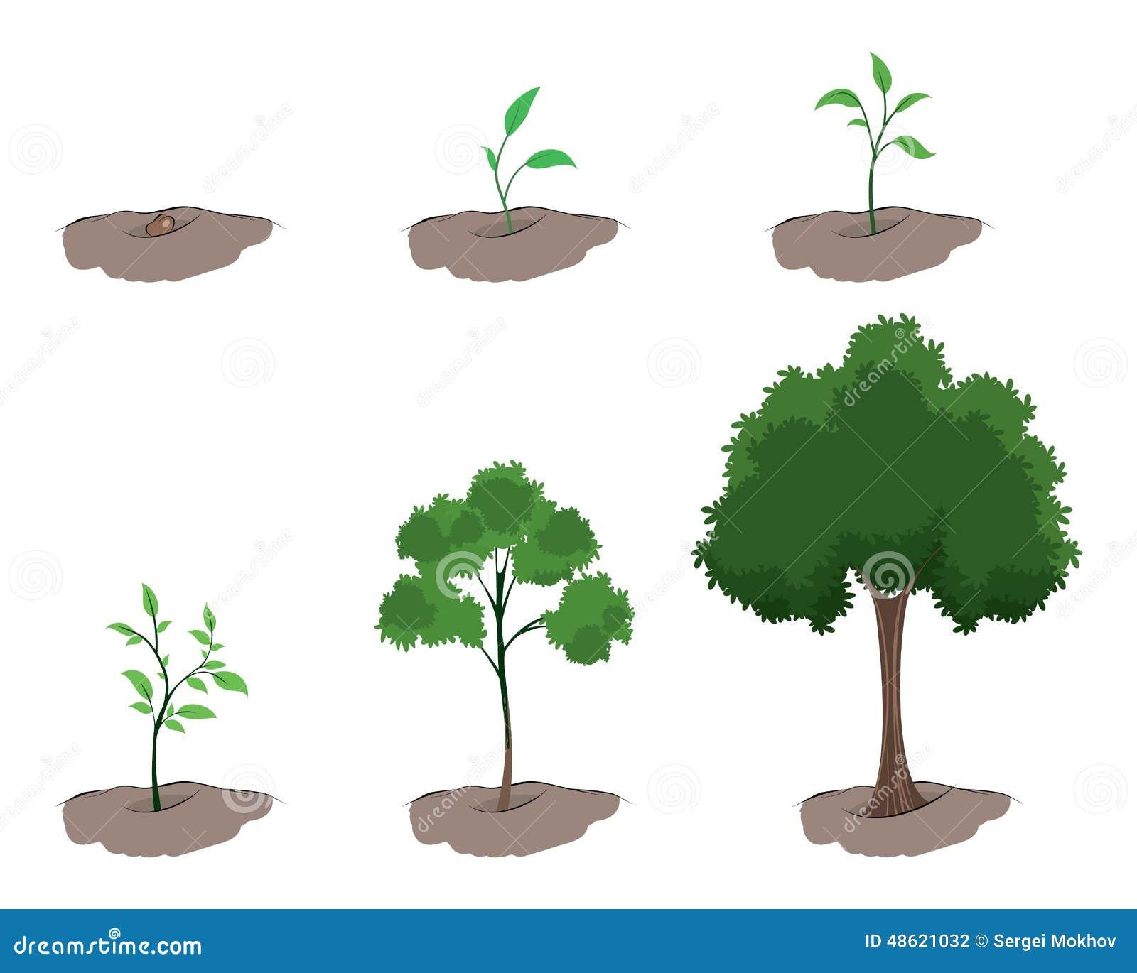 tape de la croissance de l 39 arbre illustration de vecteur image 48621032. Black Bedroom Furniture Sets. Home Design Ideas