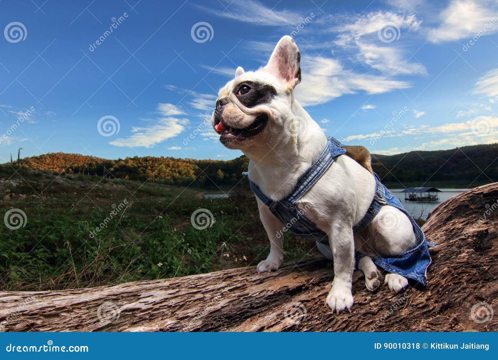 Tapferer Hund