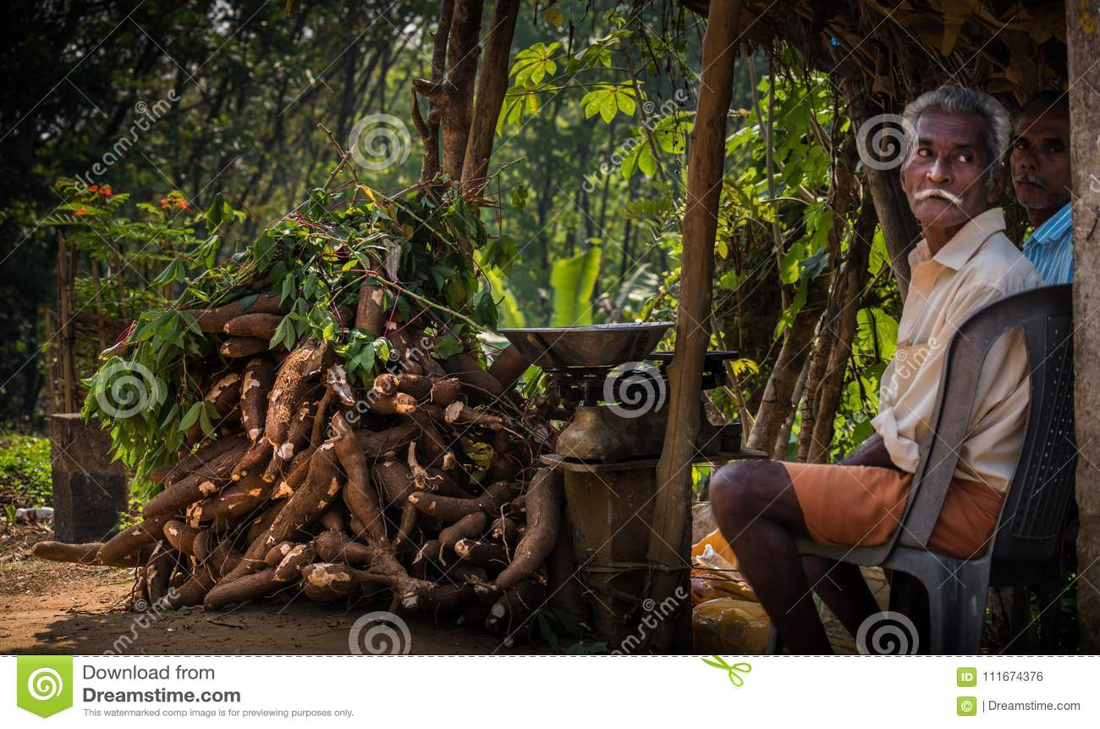 Tapioca que cosecha en Kerala