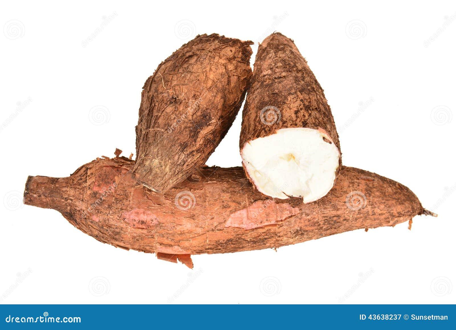 Tapioca Roots stock image. Image of arrangement, tapioca ...