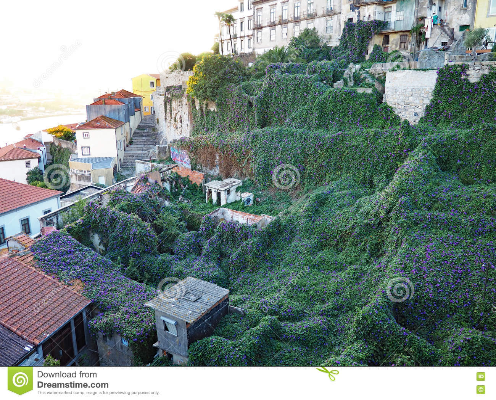 Tapis des gloires de matin, Porto, Portugal