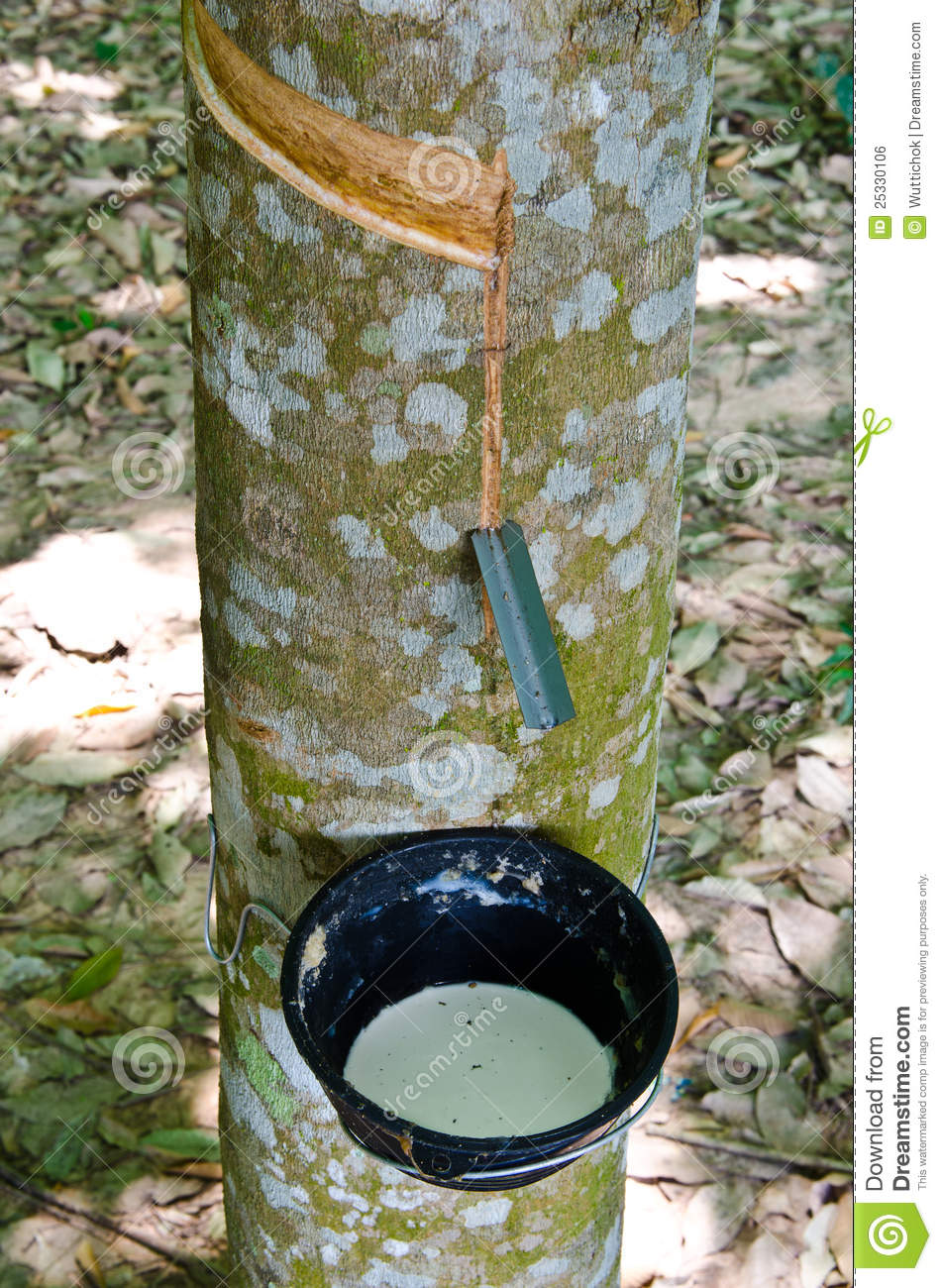 Tapping of latex rubber