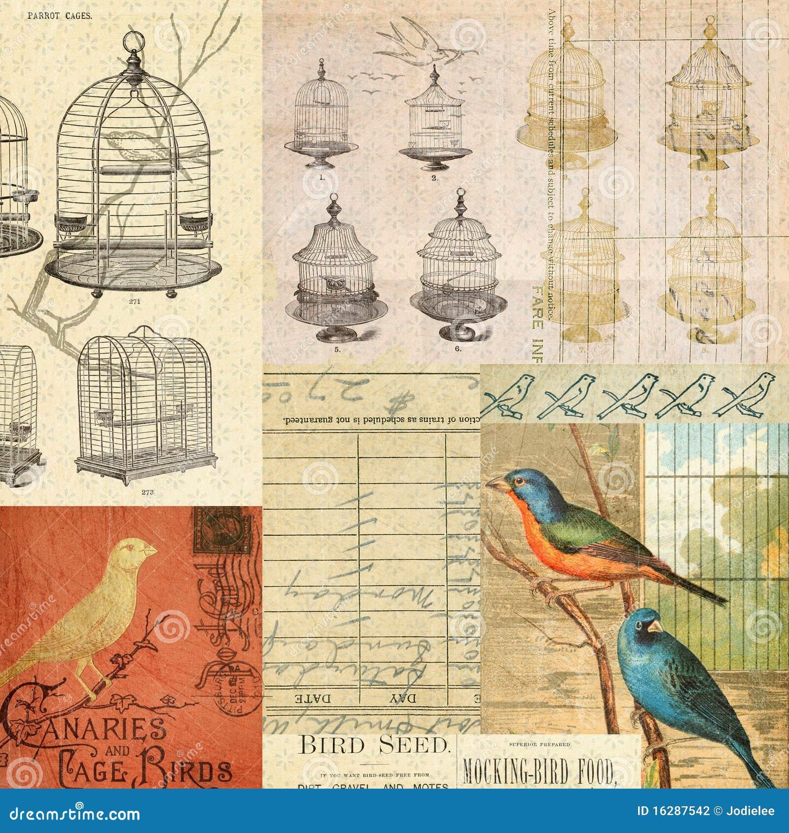 Tappning för montage för collage för bakgrundsfågelburar