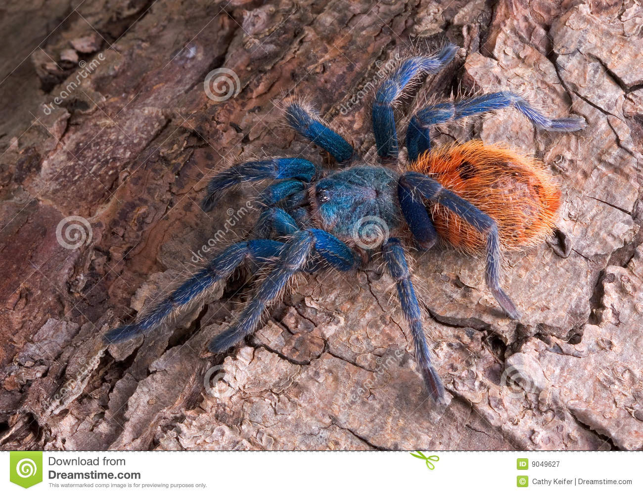 Green Bottle Blue Tarantula Web | www.imgkid.com - The ...
