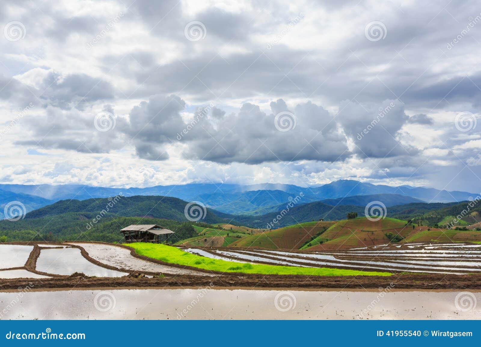 Tarasowaty irlandczyka pole w dżem wiosce, Chaingmai prowincja, T