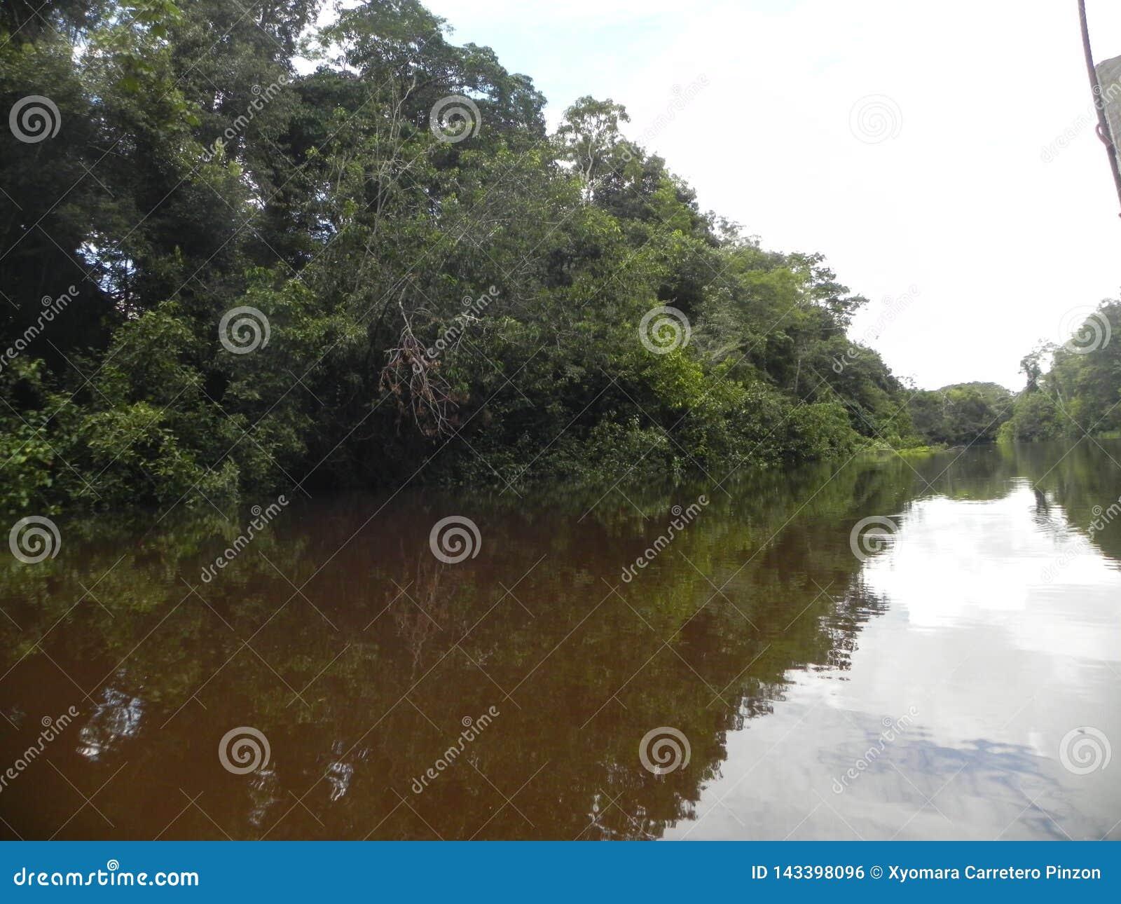Tarde en el bosque del Amazonas