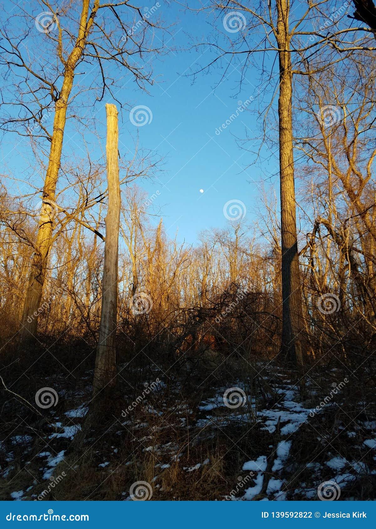Tarde ensolarada com madeiras do inverno