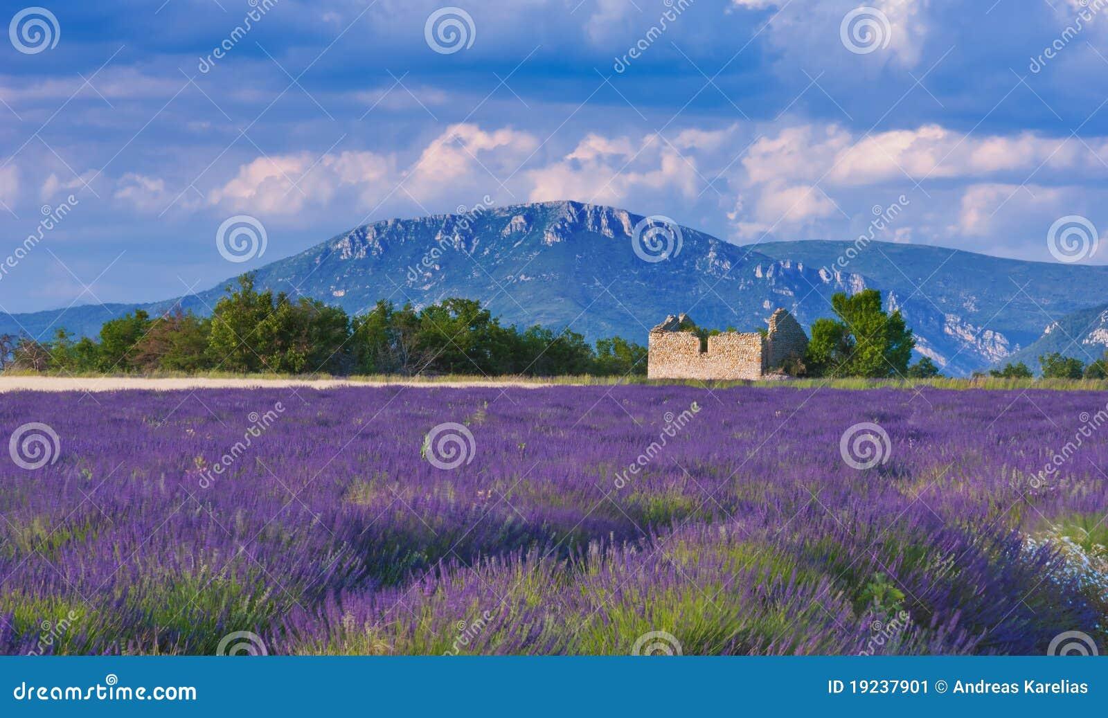 Tarde ventosa em Provence