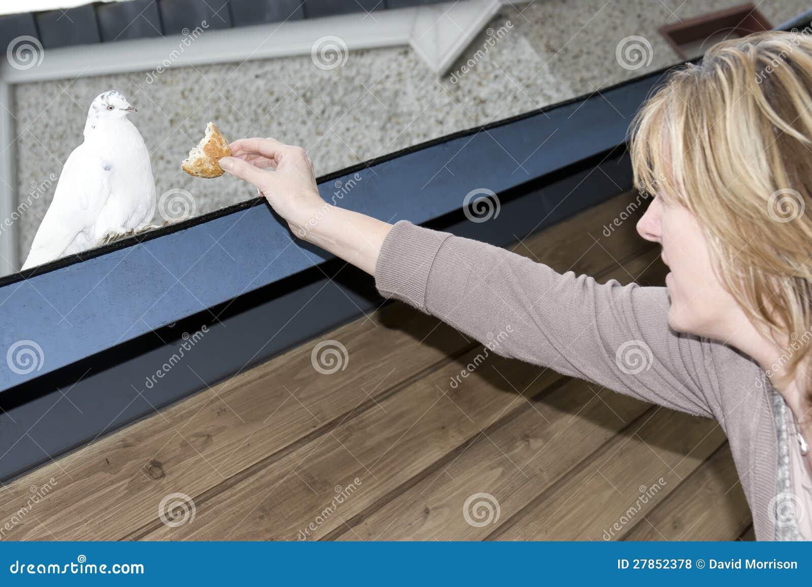 TARGET1021_0_ chlebową skorupę samotna biały gołąbka jest