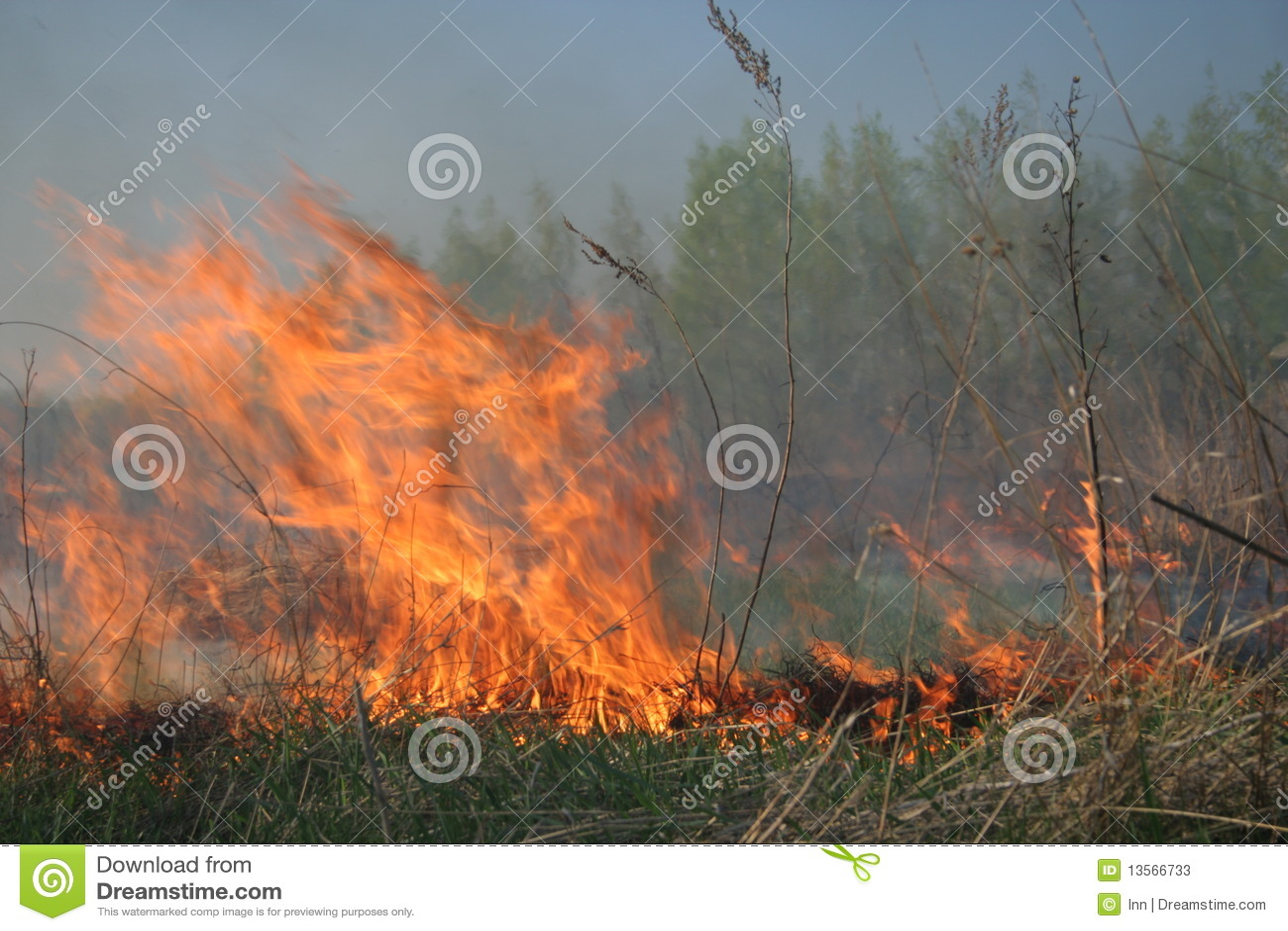 Target1221_0_ pożarniczy las