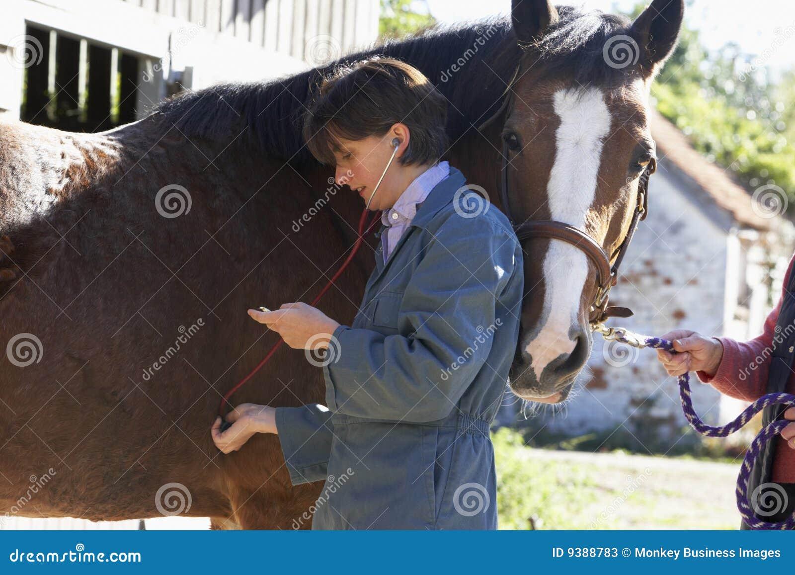 Target805_0_ stethescope końskiego weterynarza
