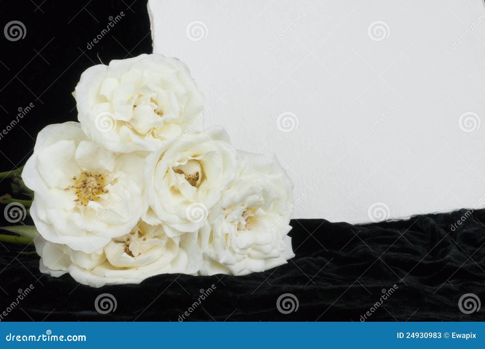 Tarjeta De Condolencia Y Rosas Blancas Con El Espacio De
