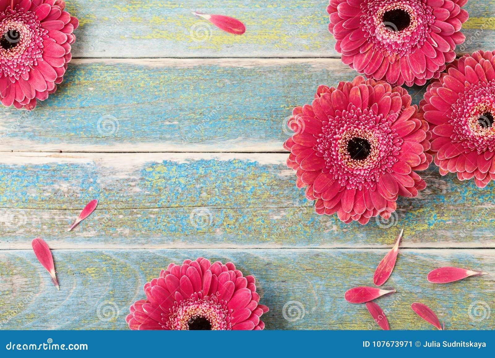 Tarjeta de felicitación natural hermosa de la flor de la margarita del gerbera para el fondo del día de la madre o de la mujer Vi