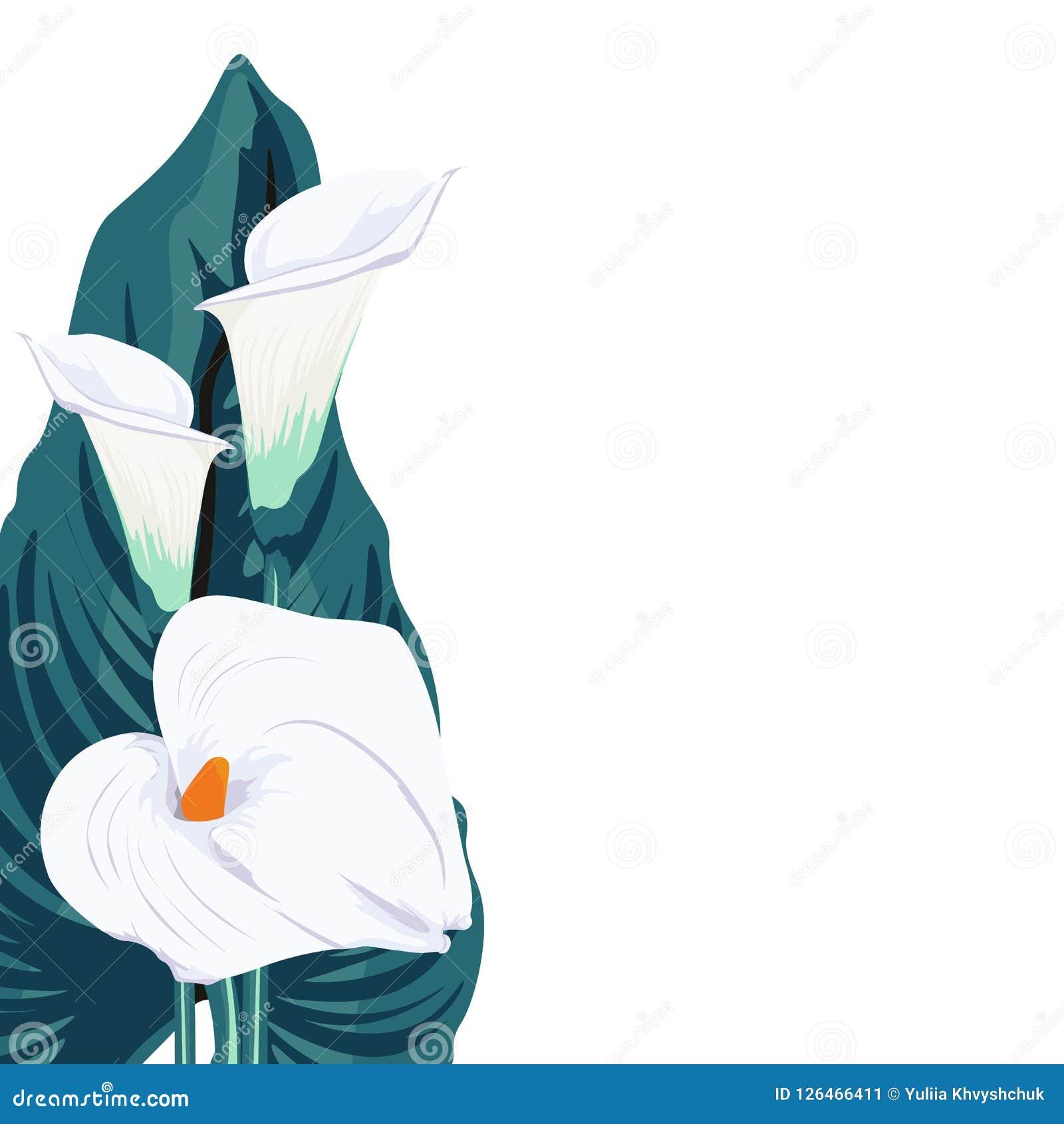 e294e137995dc Tarjeta elegante blanca del ramo de los lirios y de las hojas de calas  Decoraciones de una primavera Pequeña guirnalda floral Ilustración del  vector