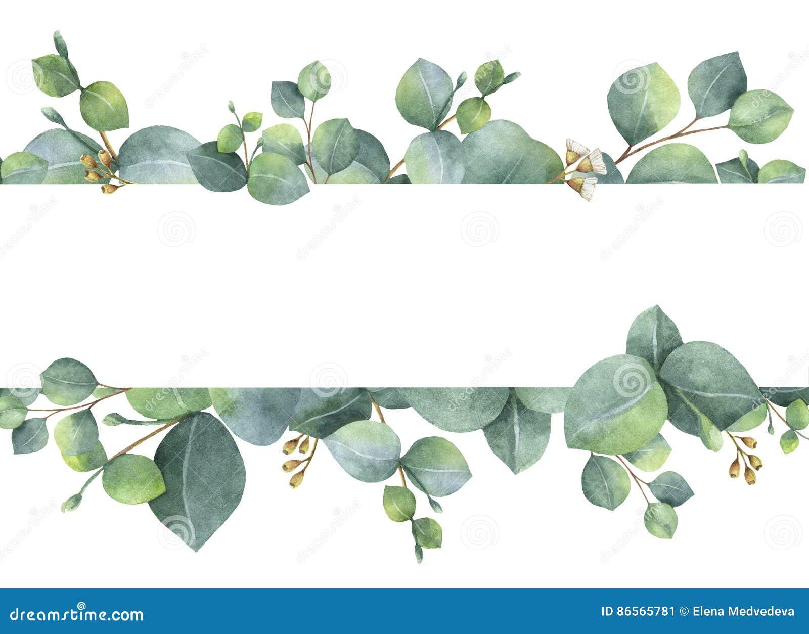 Tarjeta floral verde de la acuarela con las hojas y las ramas del eucalipto del dólar de plata aisladas en el fondo blanco