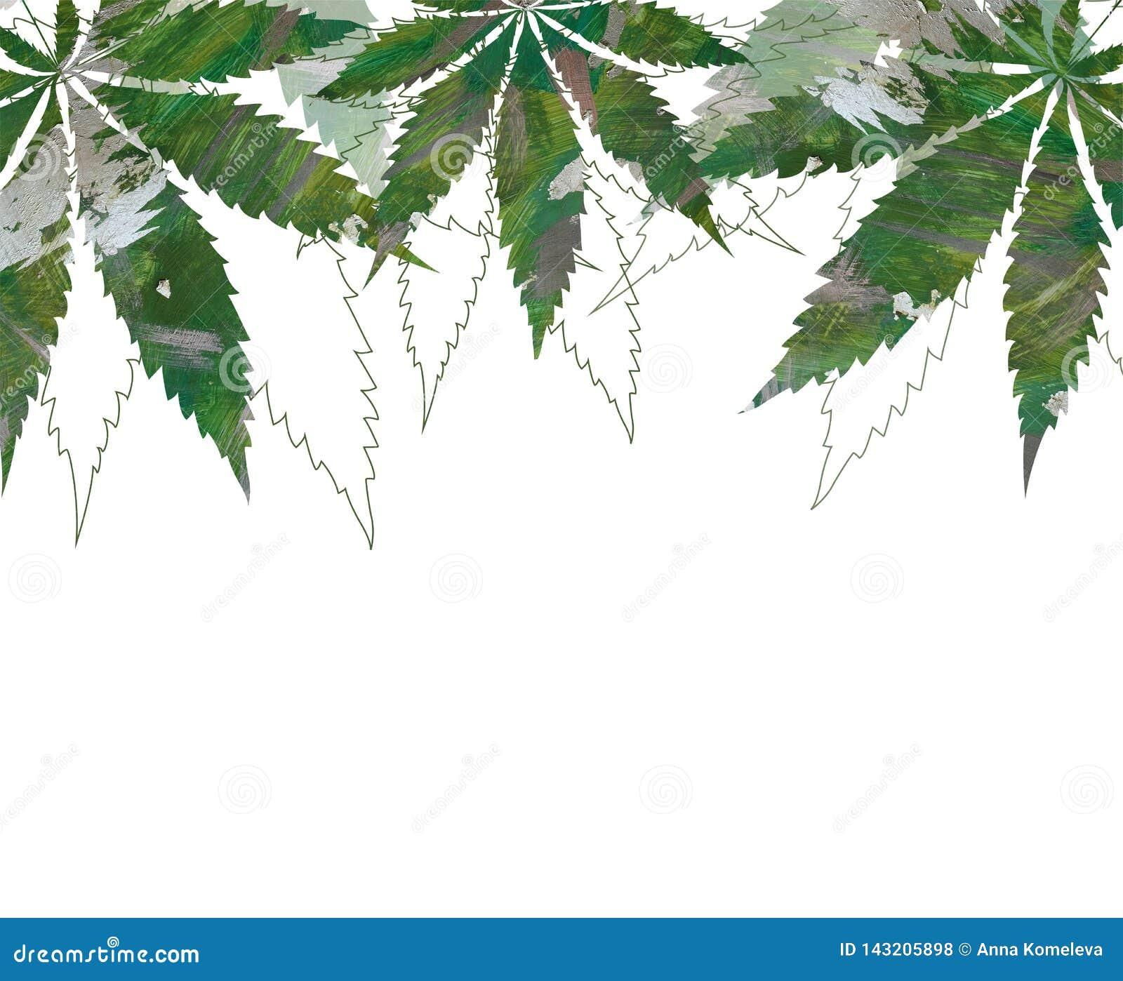 Tarjeta, plantilla, dibujo de la mano de la bandera de hojas de los cáñamos del cáñamo