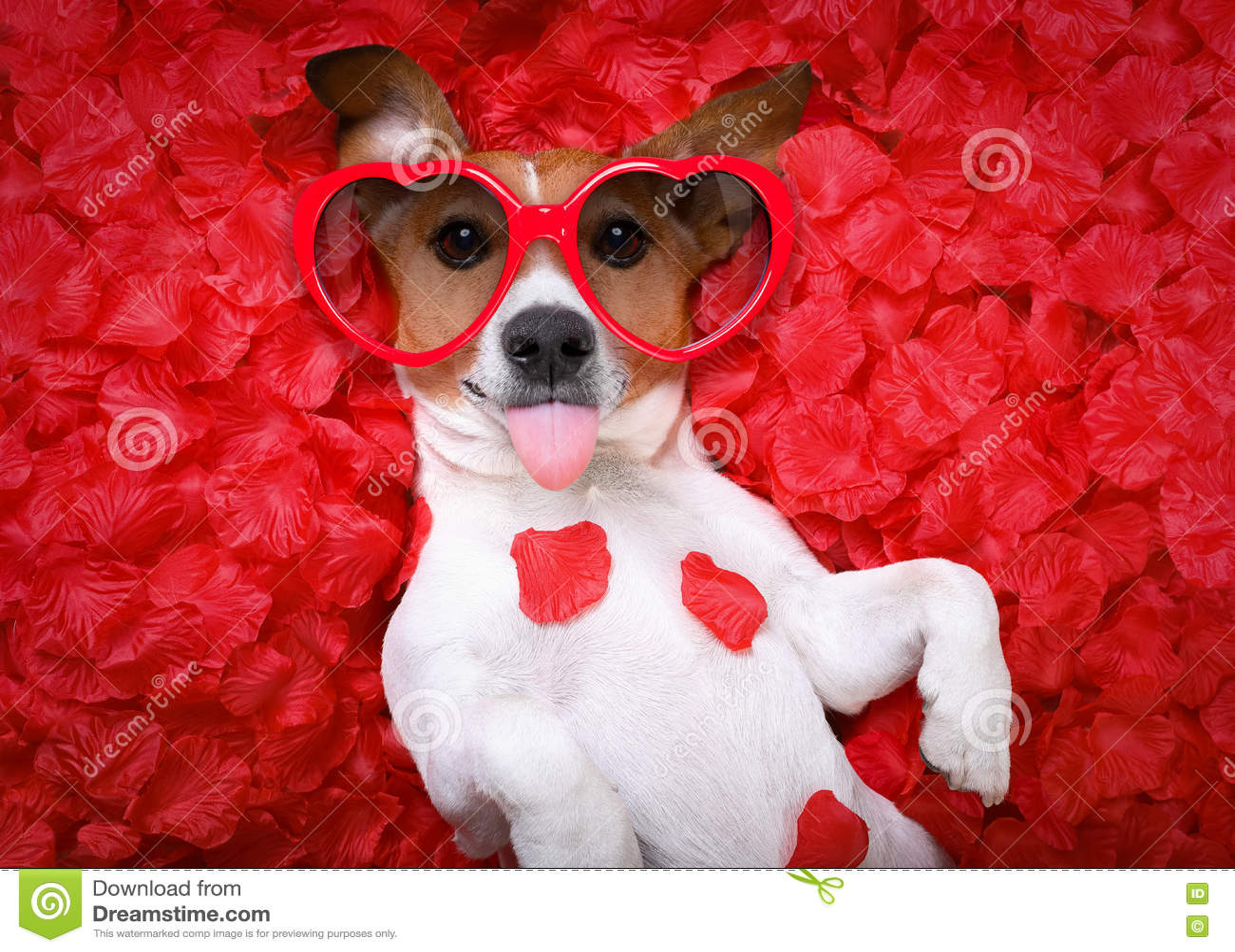 Tarjetas del día de San Valentín color de rosa del amor del perro