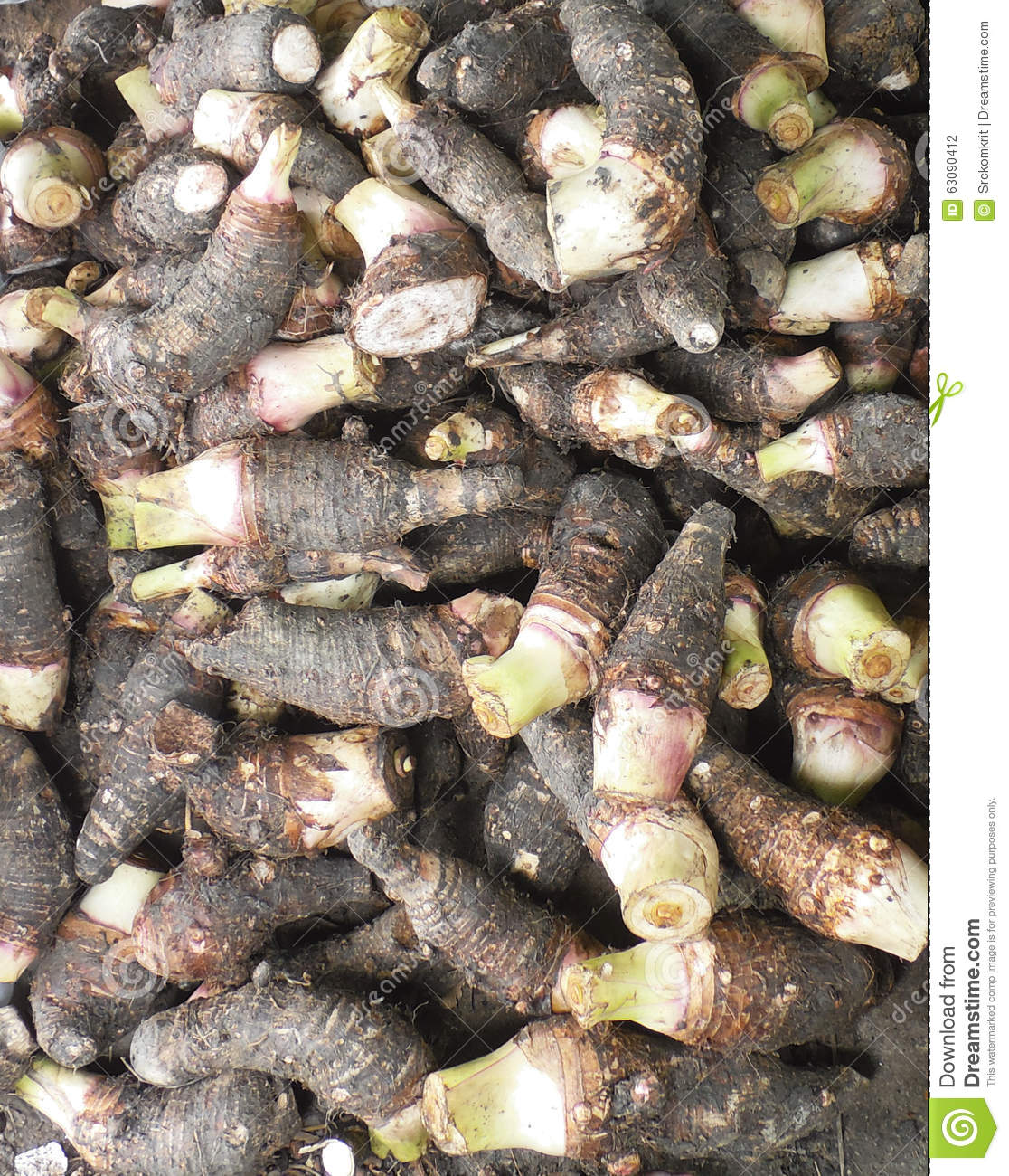 Taro Is A Root Vegetable Common In Many Asian, Eastern ...