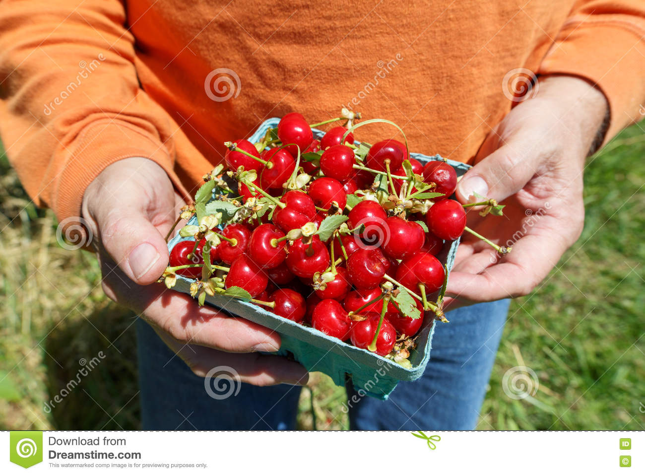 Sour Cherries Nutritional Information