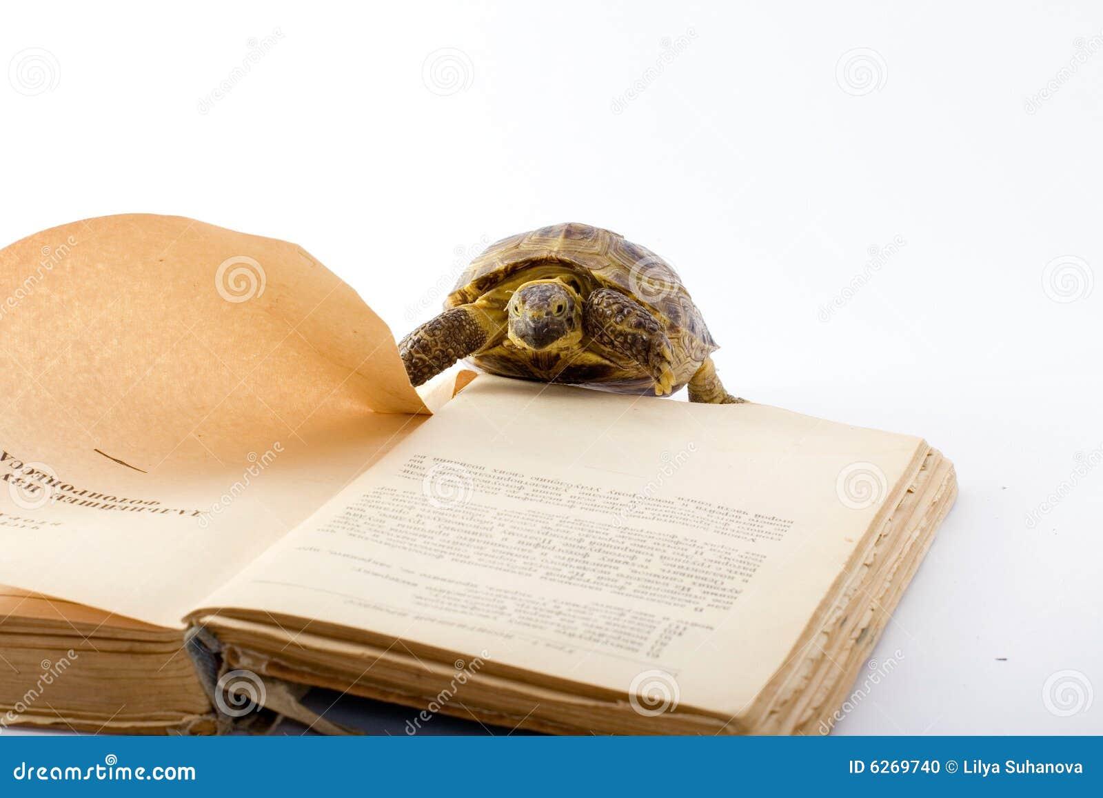 Tartaruga fotografia stock immagine di pagina saggezza - Pagine di colorazione tartaruga ...