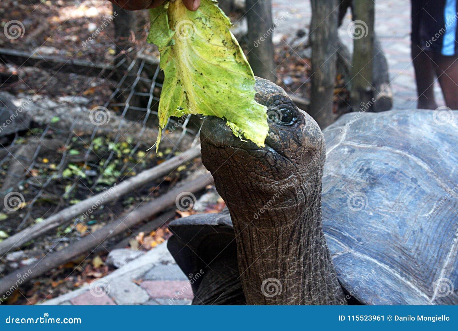 Tartaruga com fome