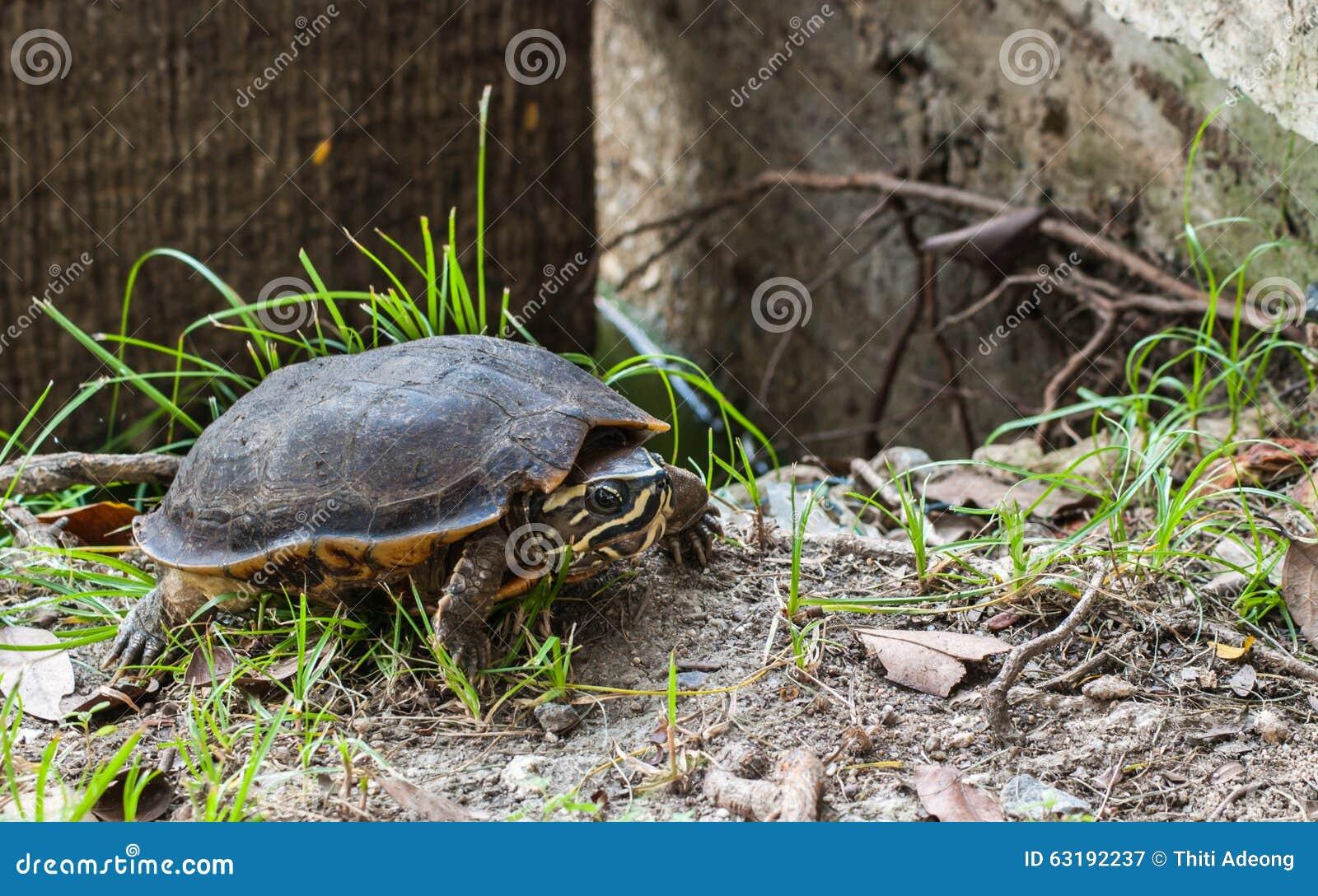 Rocce acquario acqua dolce casamia idea di immagine for Sassi per tartarughe