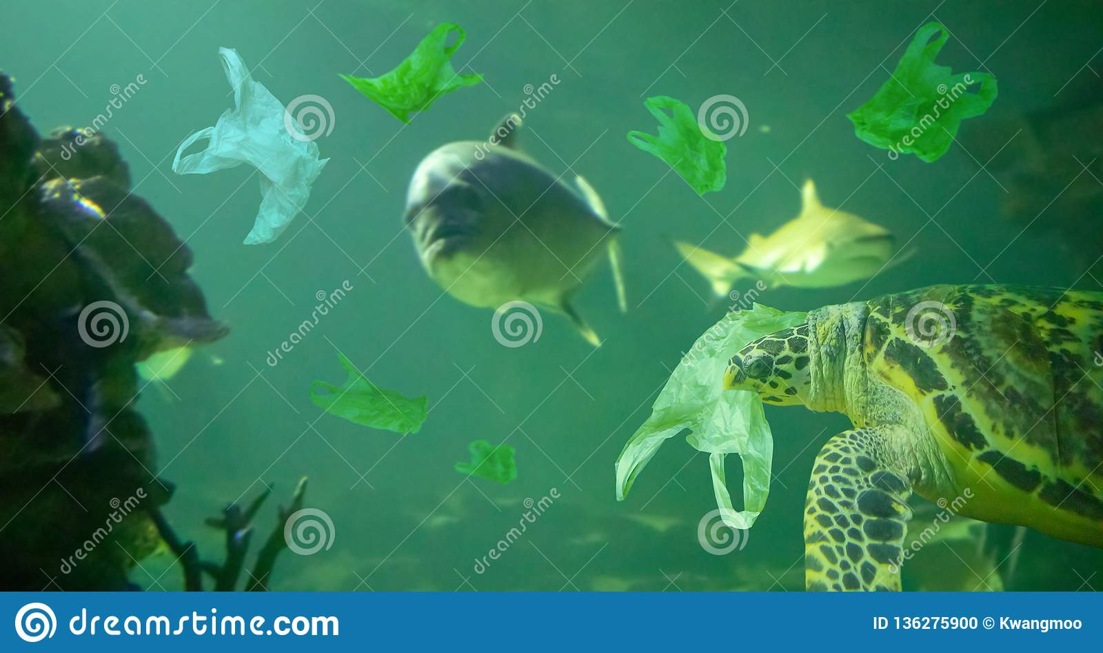 A tartaruga de mar come o oceano do saco de plástico, conceito da poluição