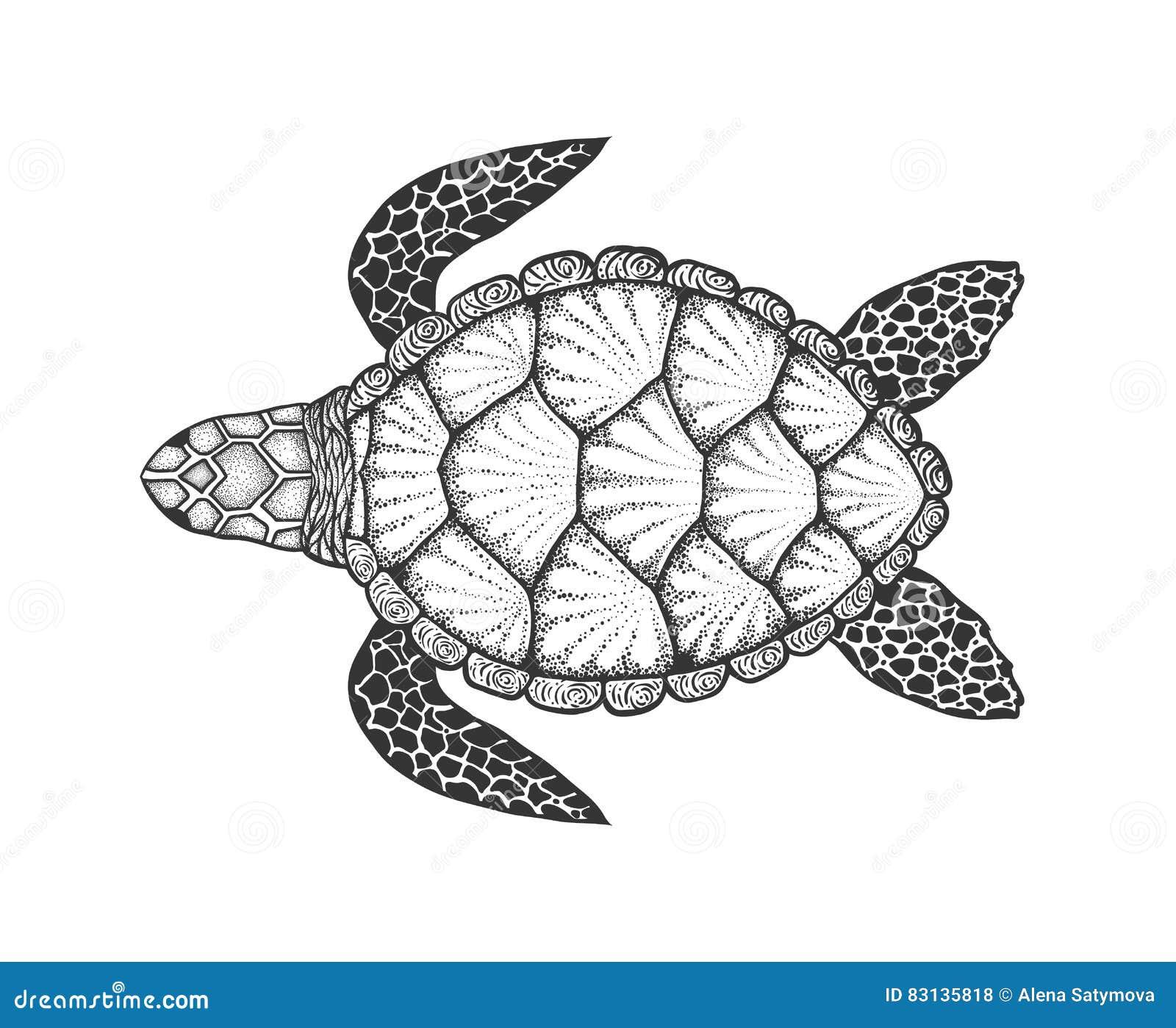 Tartaruga De Mar Na Linha Estilo Da Arte Ilustracao Desenhada Mao