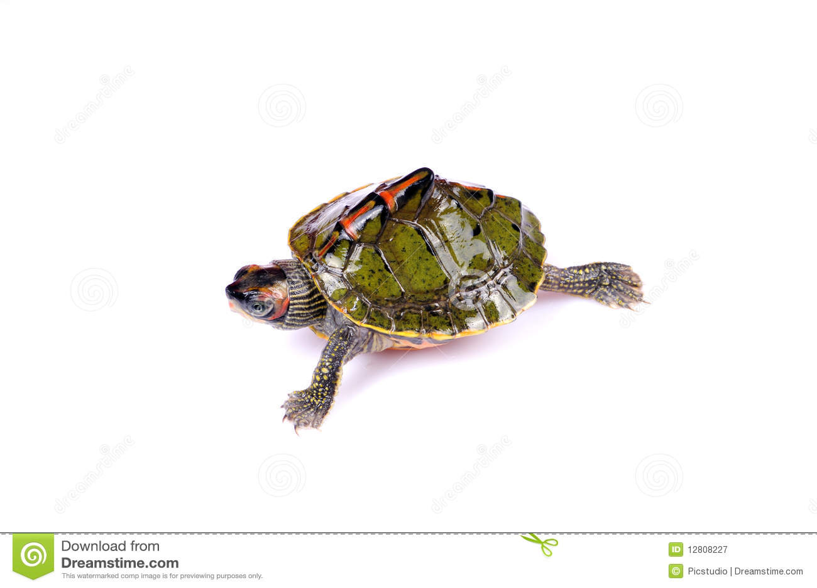 Tartaruga de passeio
