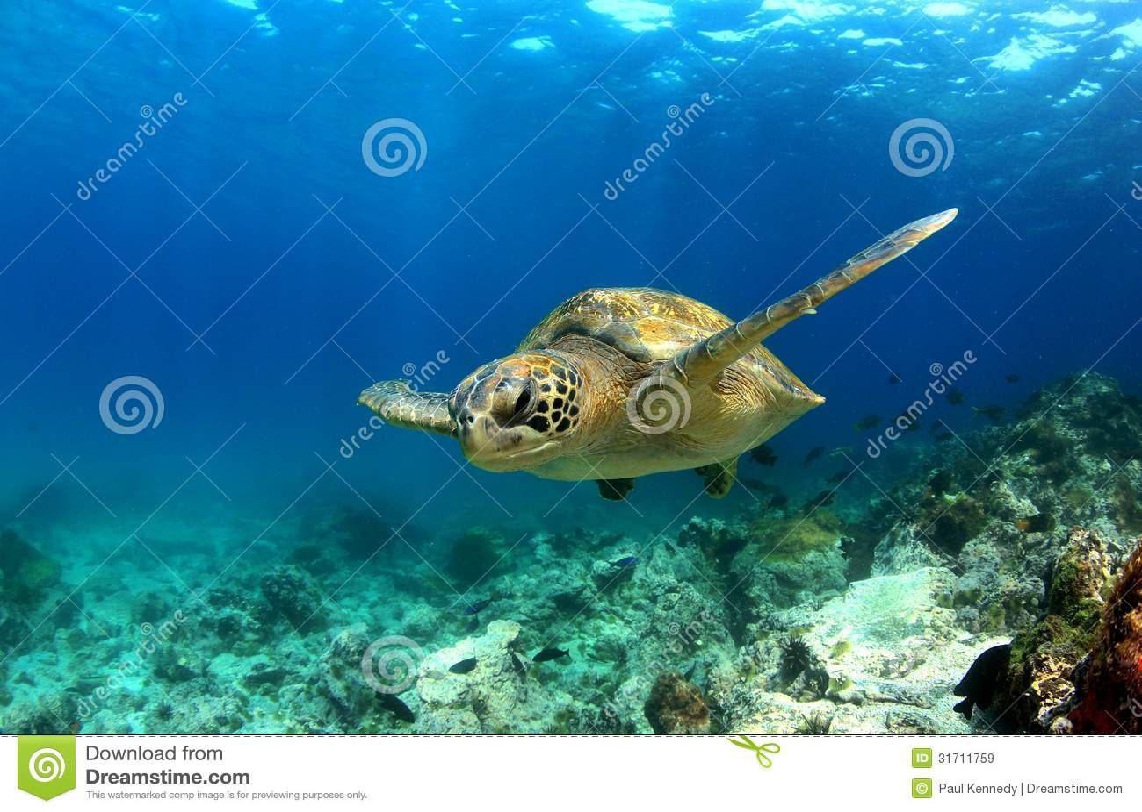 Tartaruga di mare subacquea