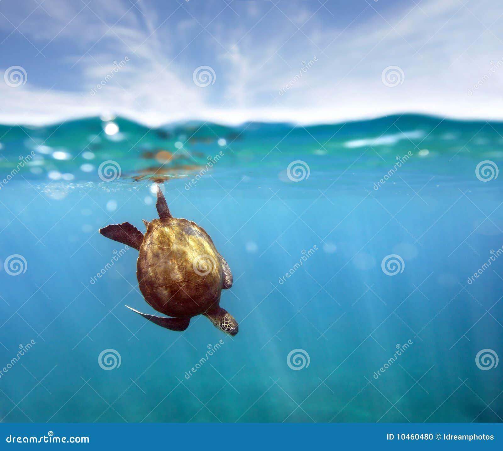 Tartaruga do Aqua