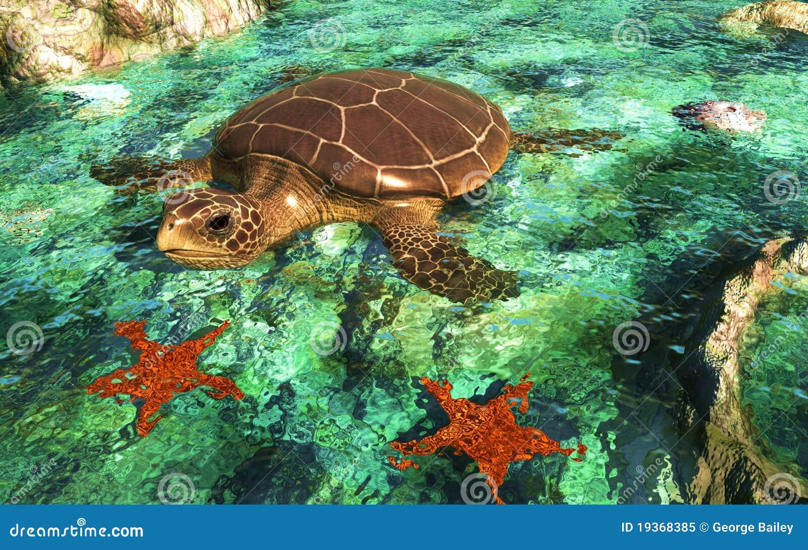 Tartaruga do mar em Shallows