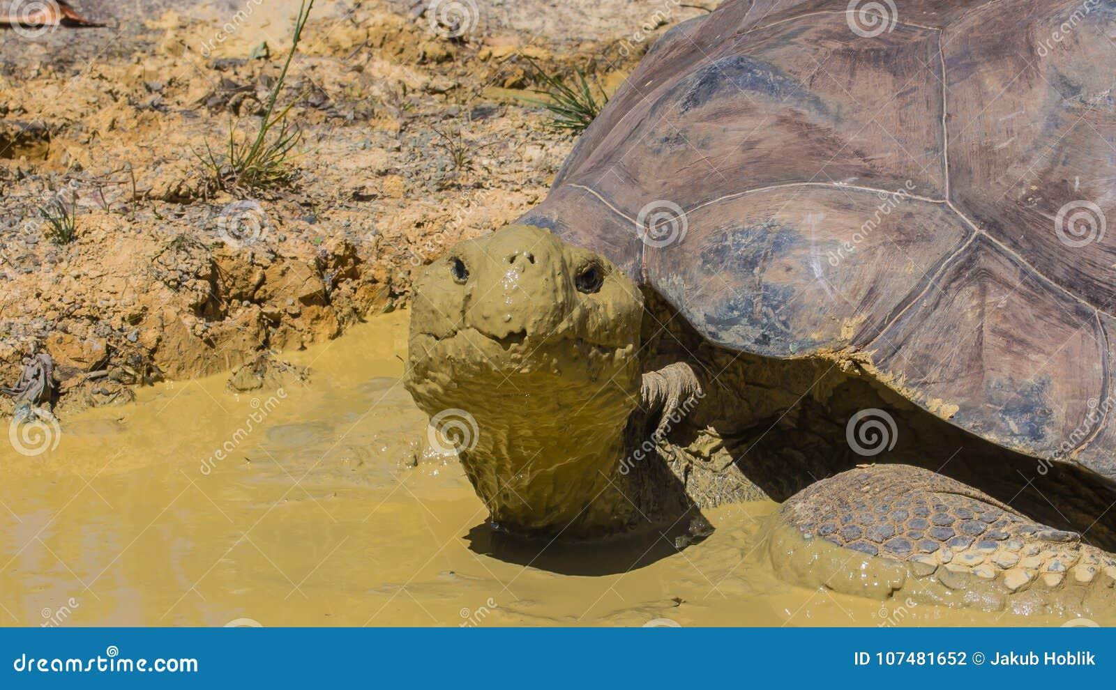 A tartaruga no jardim zoológico de Auckland