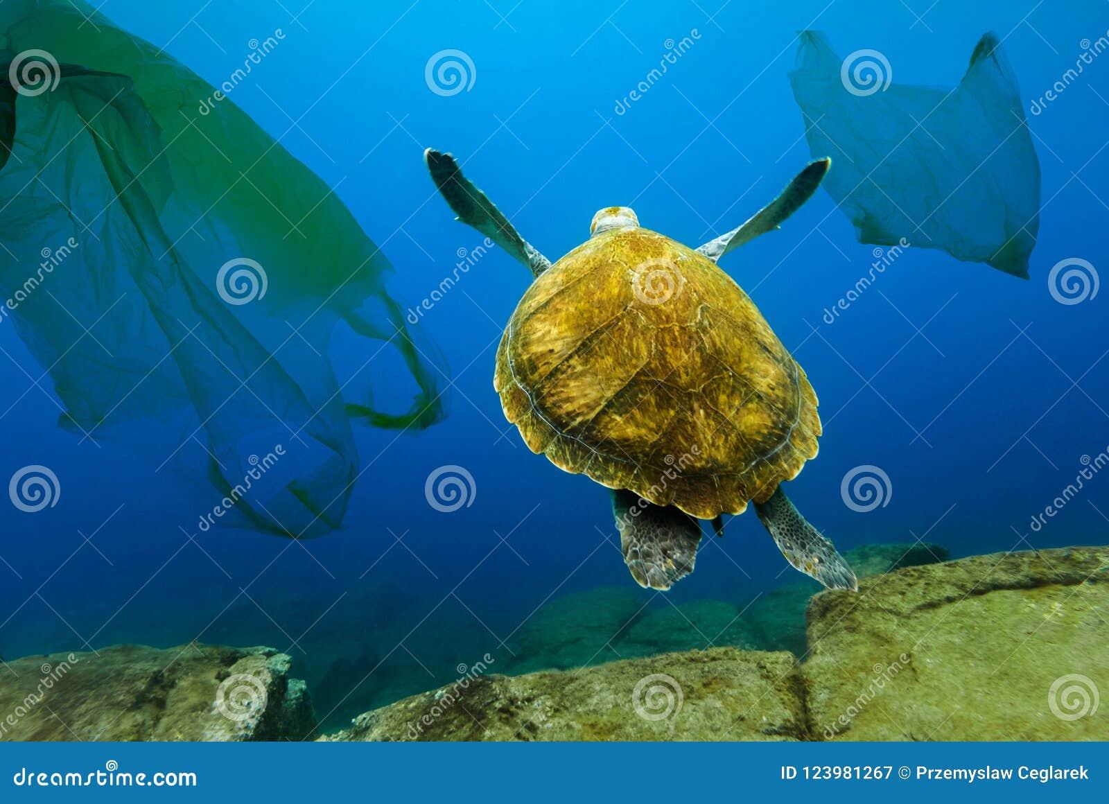 Tartaruga subaquática que flutua entre sacos de plástico Conceito da poluição do ambiente da água