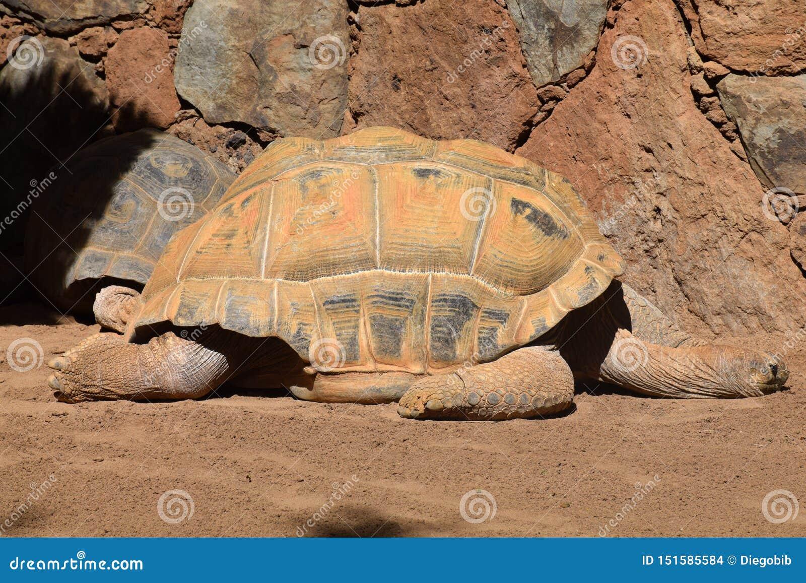 Tartaruga sulla roccia