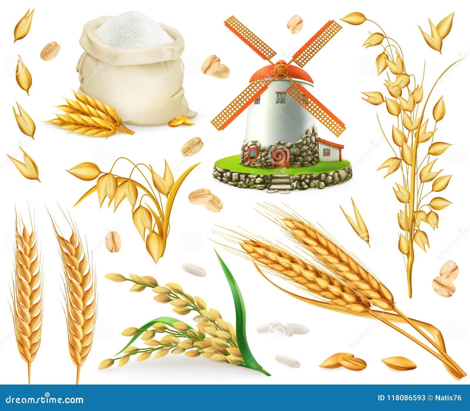 Tarwe, rijst, haver, gerst, bloem, molen en korrel 3d vectorpictogramreeks