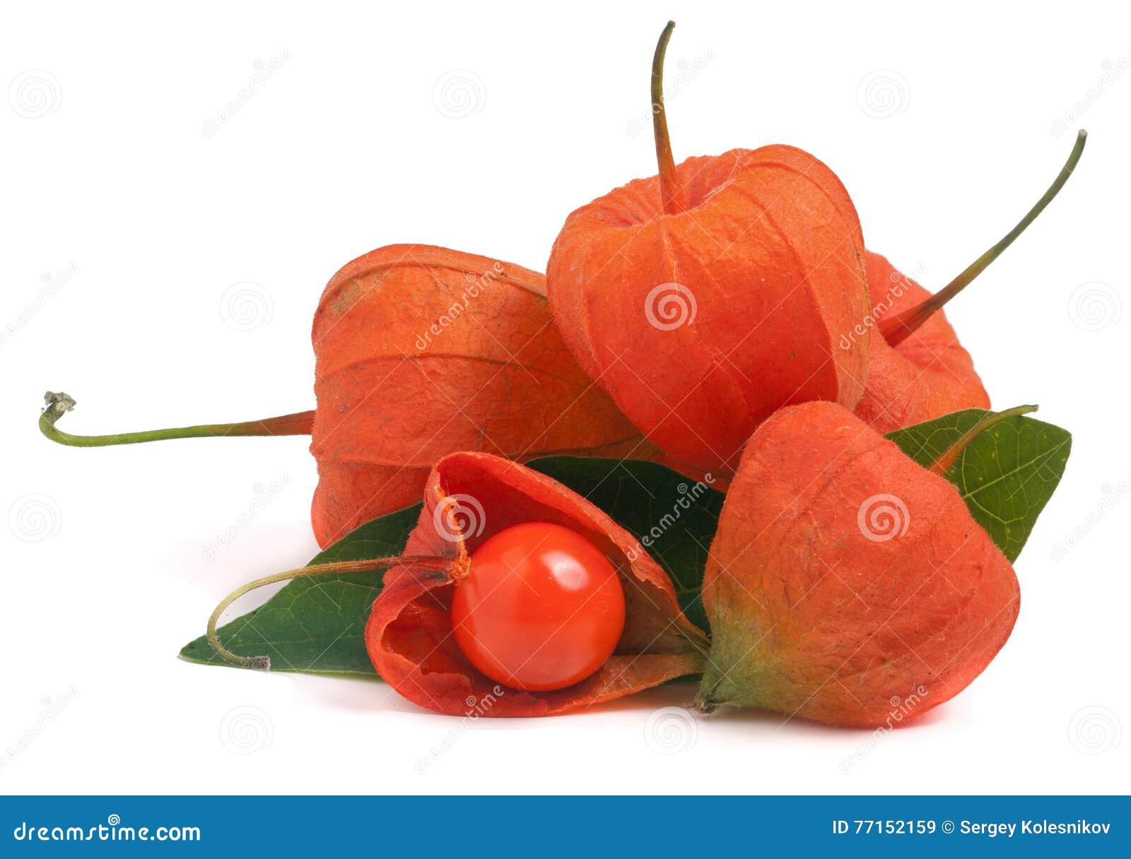 Tas des tomates de cosse ou du physalis avec la feuille d isolement sur le fond blanc