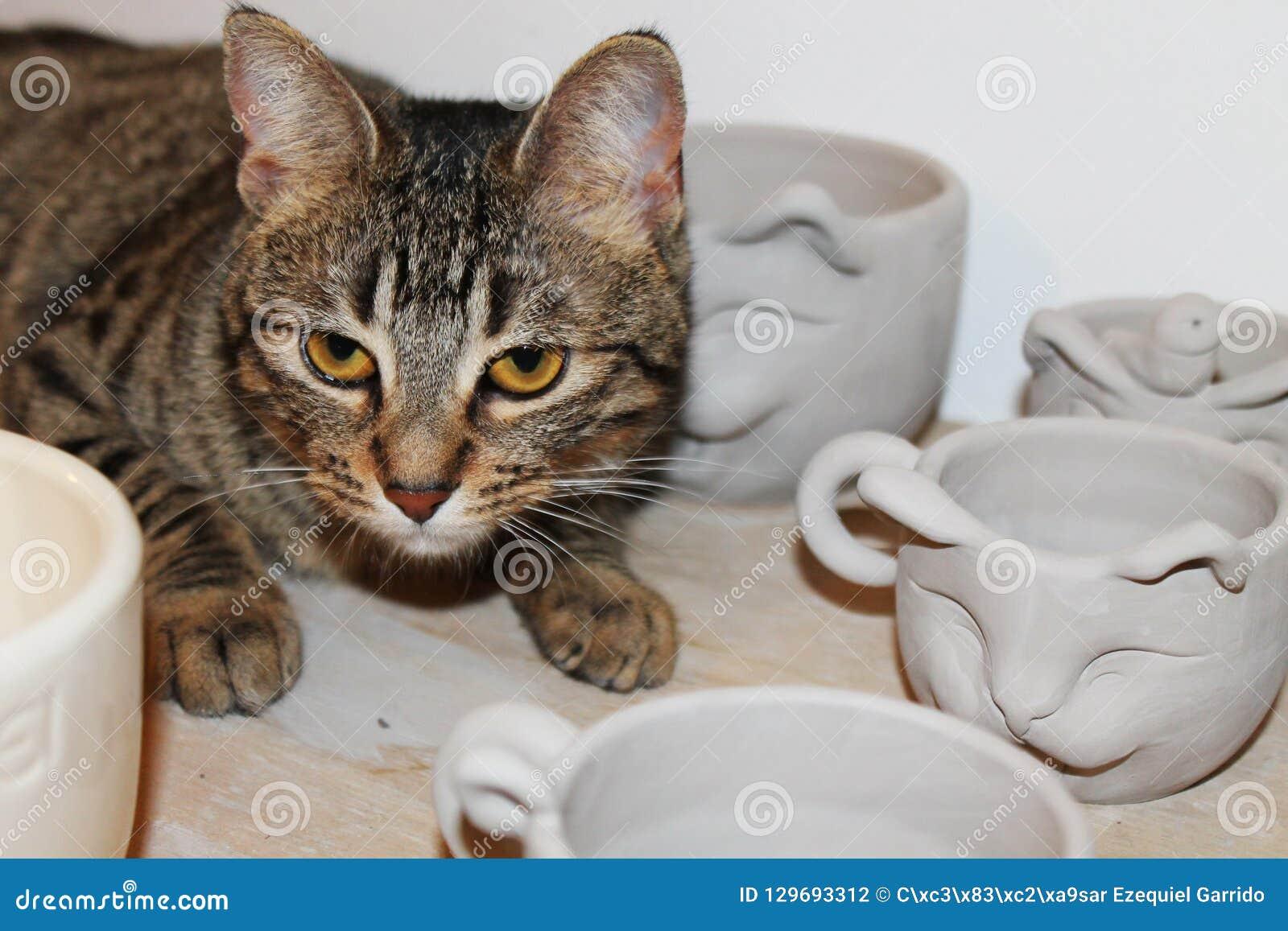 Tasses en forme de chat avec le chat dans un atelier en céramique