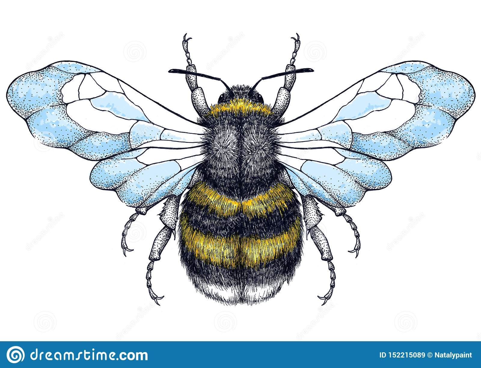 Tatouage d abeille de miel Tatouage de Dotwork Symbole de diligence