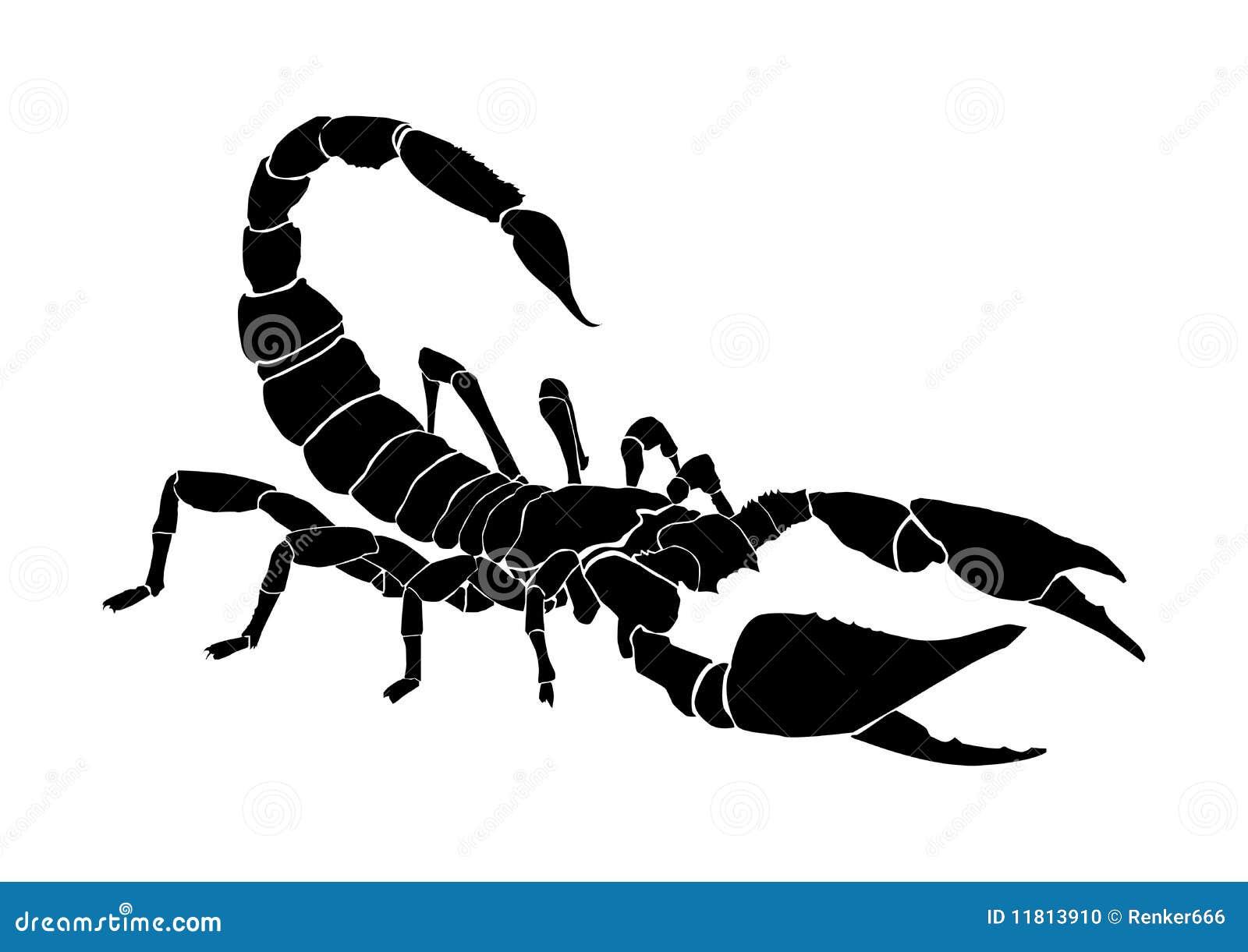 Tattoo of the scorpio stock photo image 11813910