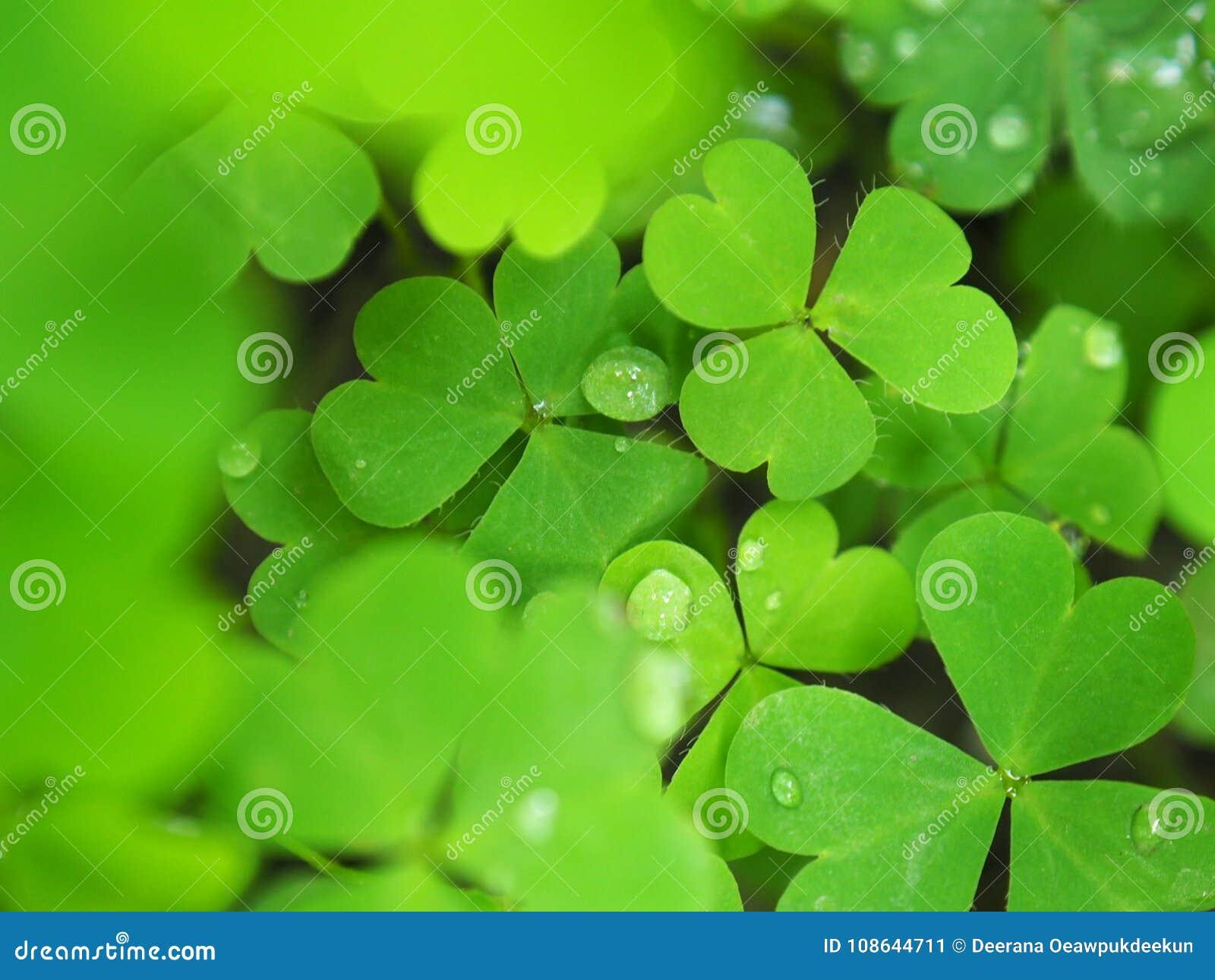 bedeutung grünes herz