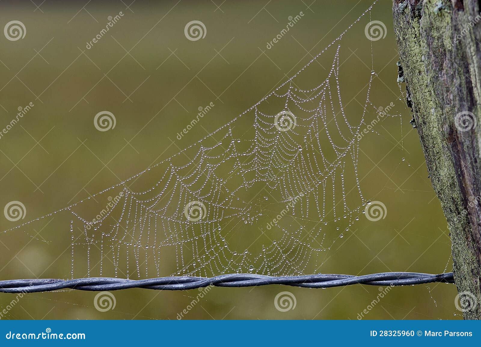 Tau Umfasste Spinnen Web Auf Zaun Stockfoto Bild Von Torsion