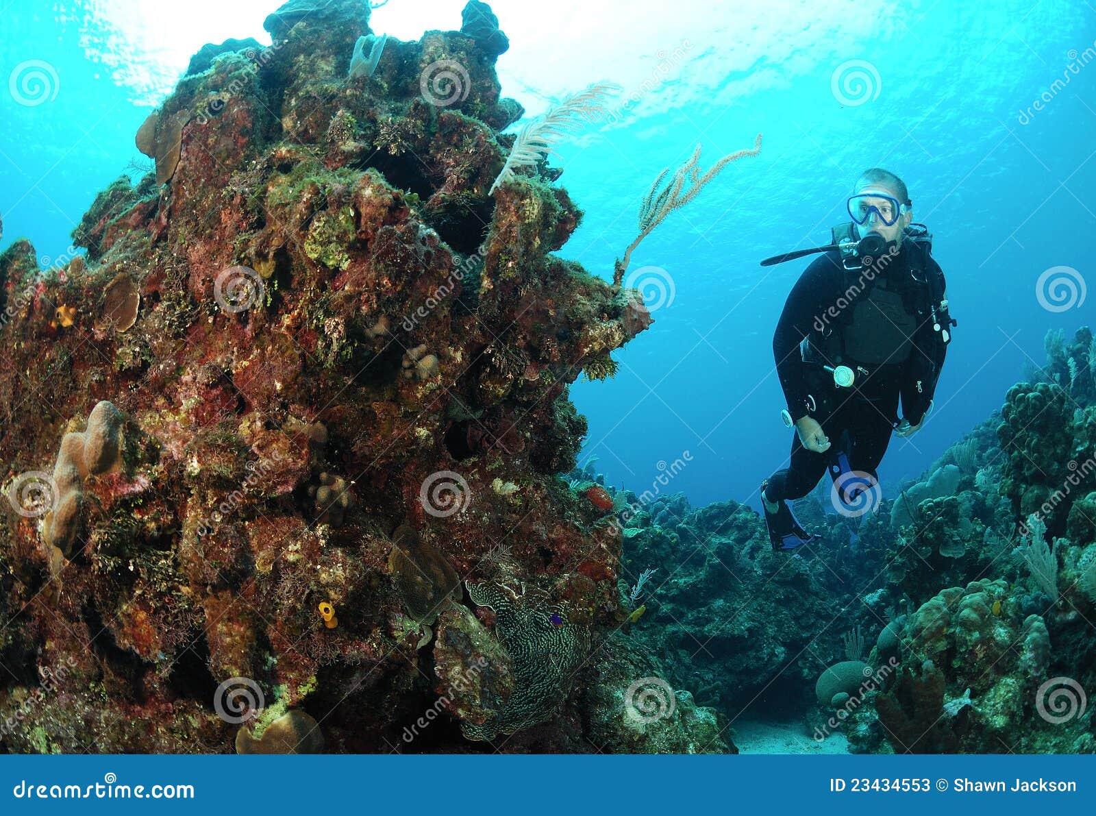 taucher auf korallenriff stockbild bild von wasser