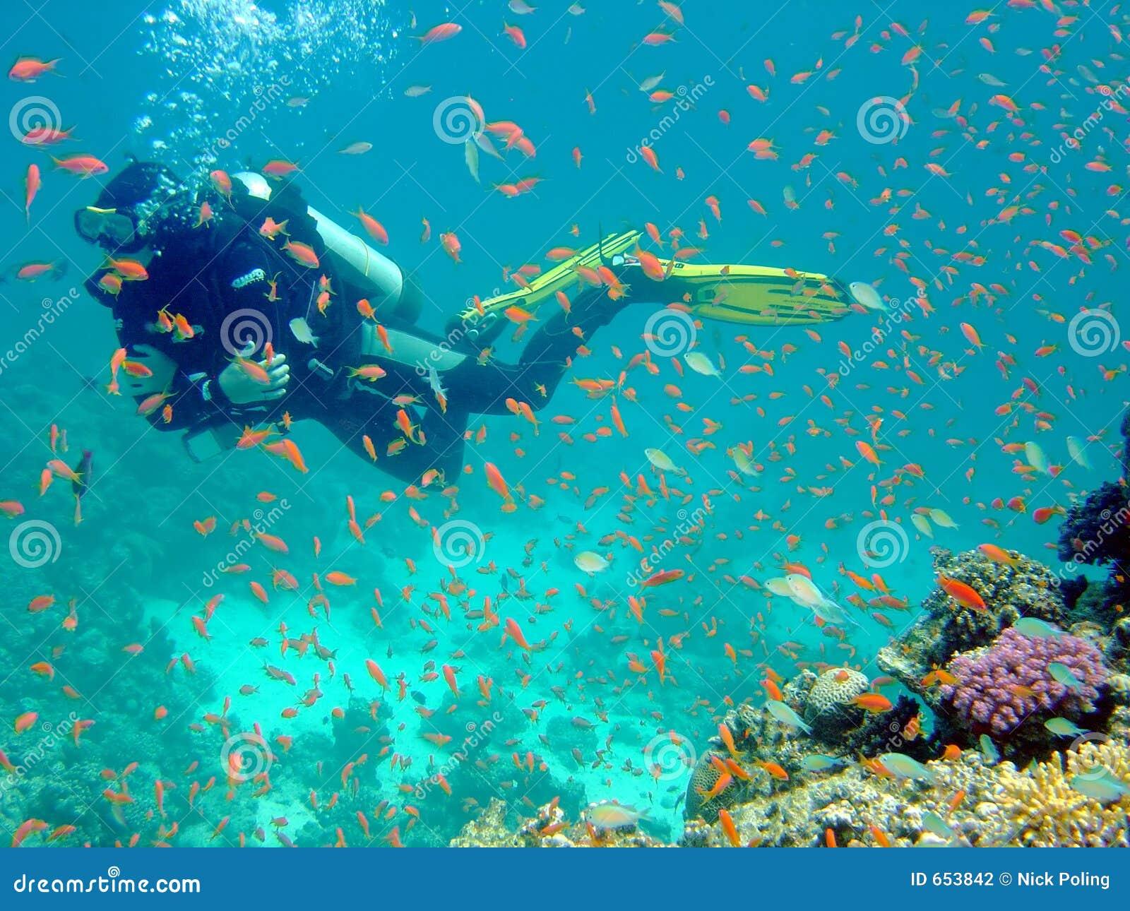 Bilder Mit Fischen : taucher mit fischen stockfotografie bild 653842 ~ Frokenaadalensverden.com Haus und Dekorationen